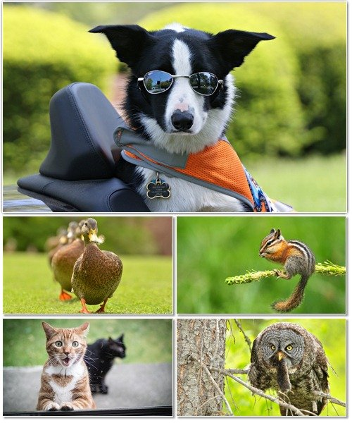 Веселые картинки с животными для фона рабочего стола 63
