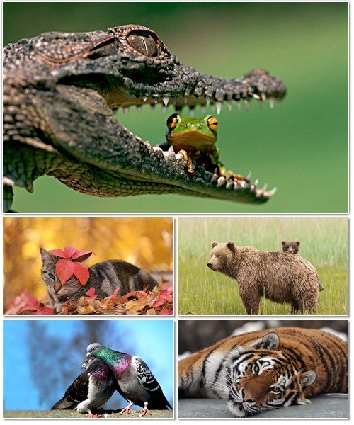 Веселые картинки с животными для фона рабочего стола 64
