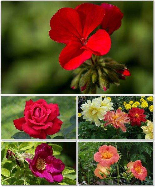 Цветы в сборнике обоев для рабочего стола 13