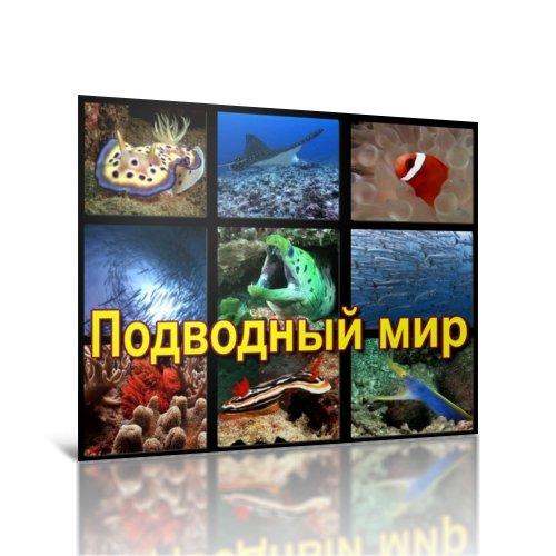 Подводный мир AVI