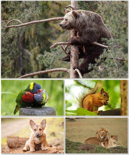 Веселые картинки с животными для фона рабочего стола 65