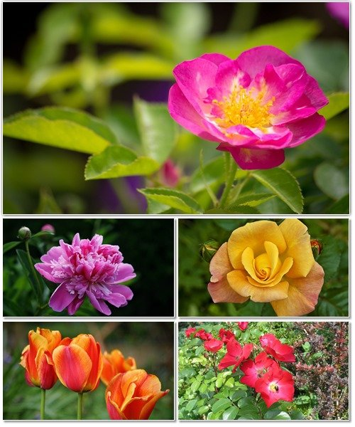 Цветы в сборнике обоев для рабочего стола 14