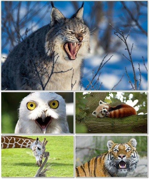 Веселые картинки с животными для фона рабочего стола 66