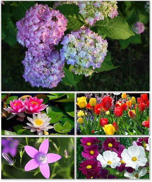 Цветы в сборнике обоев для рабочего стола 15