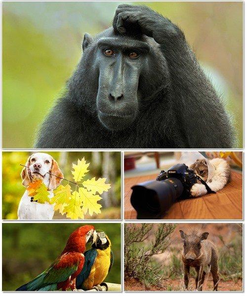 Веселые картинки с животными для фона рабочего стола 67