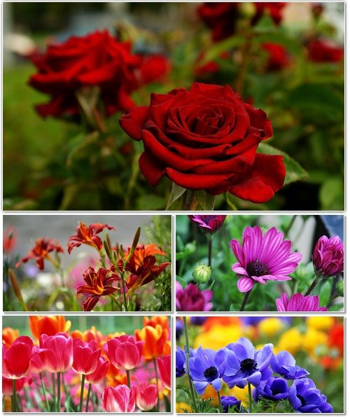 Цветы в сборнике обоев для рабочего стола 16