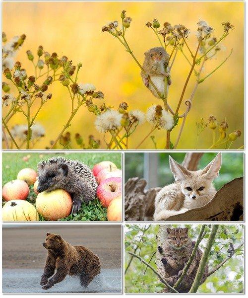 Веселые картинки с животными для фона рабочего стола 68