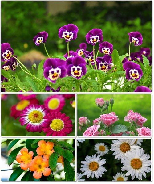 Цветы в сборнике обоев для рабочего стола 17