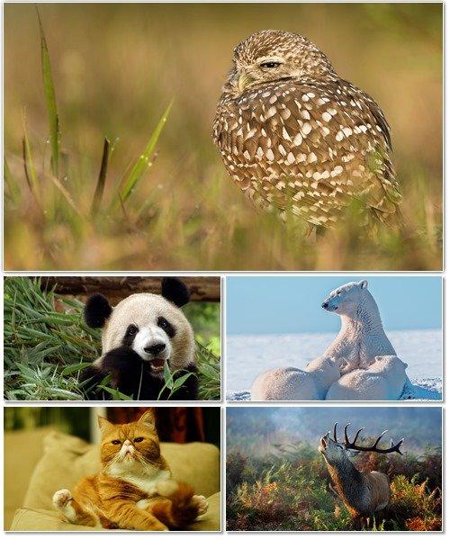 Веселые картинки с животными для фона рабочего стола 69