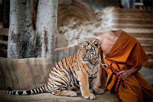 Шаблон для мужчин - Маленький тигр