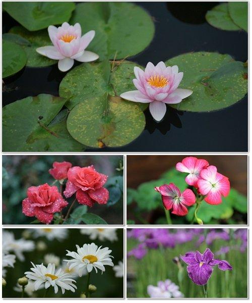 Цветы в сборнике обоев для рабочего стола 18