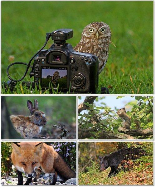 Веселые картинки с животными для фона рабочего стола 70