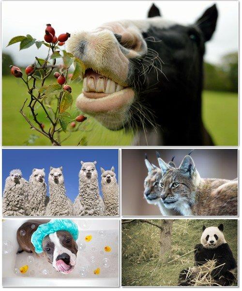 Веселые картинки с животными для фона рабочего стола 71