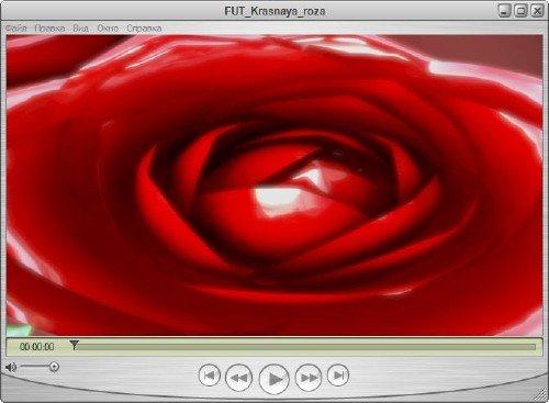 Прекрасный романтический футаж - Нежность розы