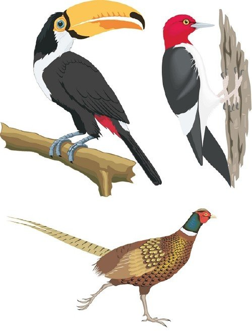 Векторная подборка: Птицы