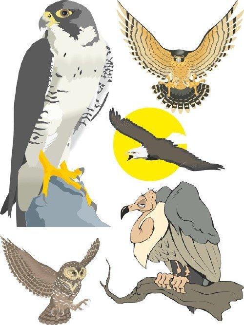 Хищные птицы в векторе (орлы, грифы, совы и тд.)
