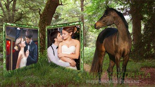 Рамка для фото - Лошадка смотрит на ваше фото