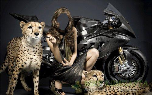 Женский шаблон - Фотосессия с 2 гепардами и мотоциклом