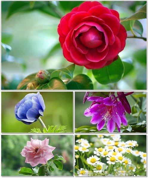 Цветы в сборнике обоев для рабочего стола 26