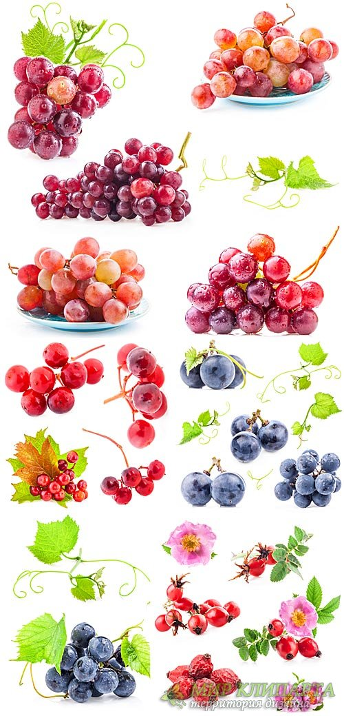 Виноград, калина, шиповник - сток фото