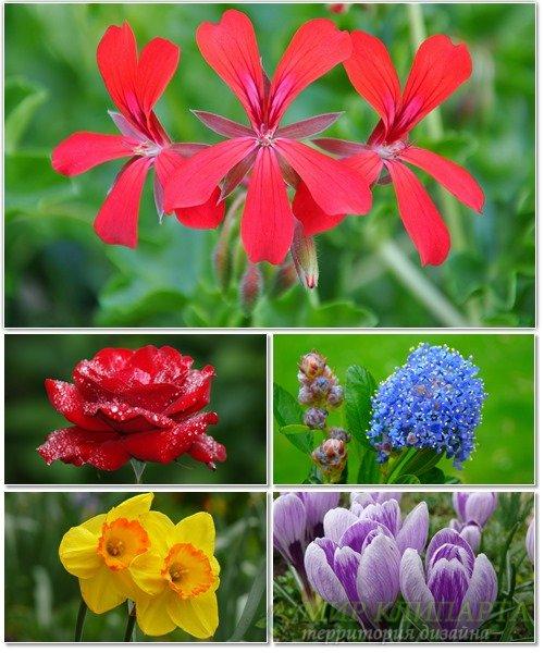 Цветы в сборнике обоев для рабочего стола 28