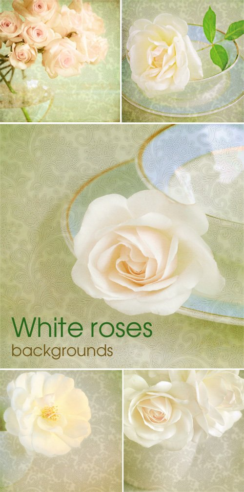 White roses - backgrounds