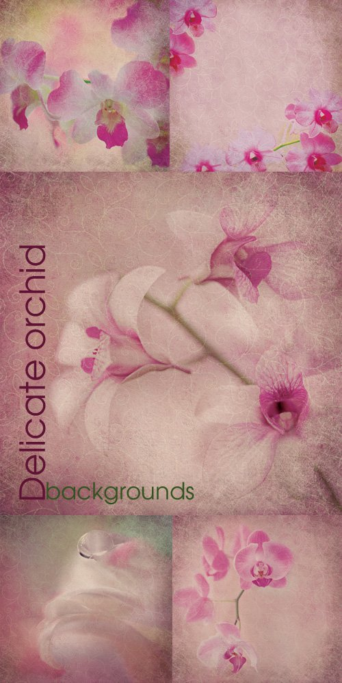 Delicate orchid backgrounds