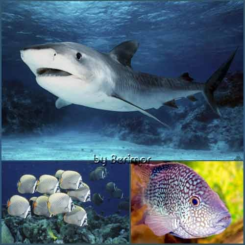 Всевозможные рыбы всяческих морей и океанов