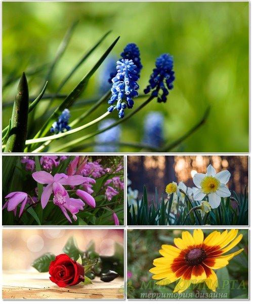 Цветы в сборнике обоев для рабочего стола 30