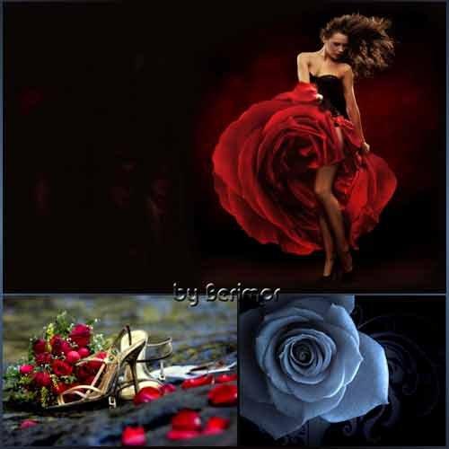Всевозможные и неимоверно  прекрасные розы
