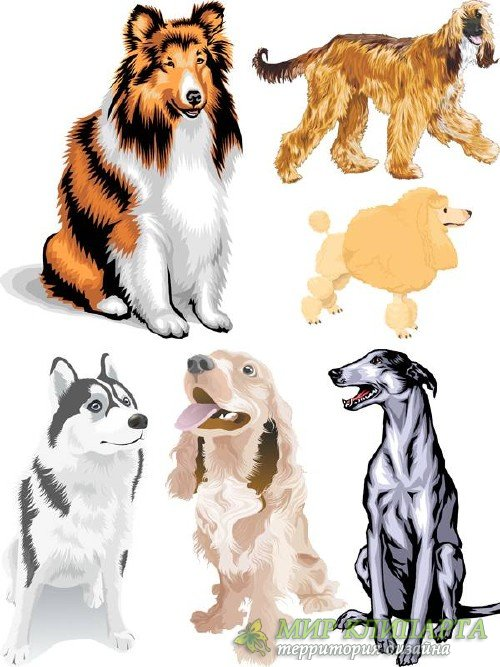 Собаки - подборка вектора
