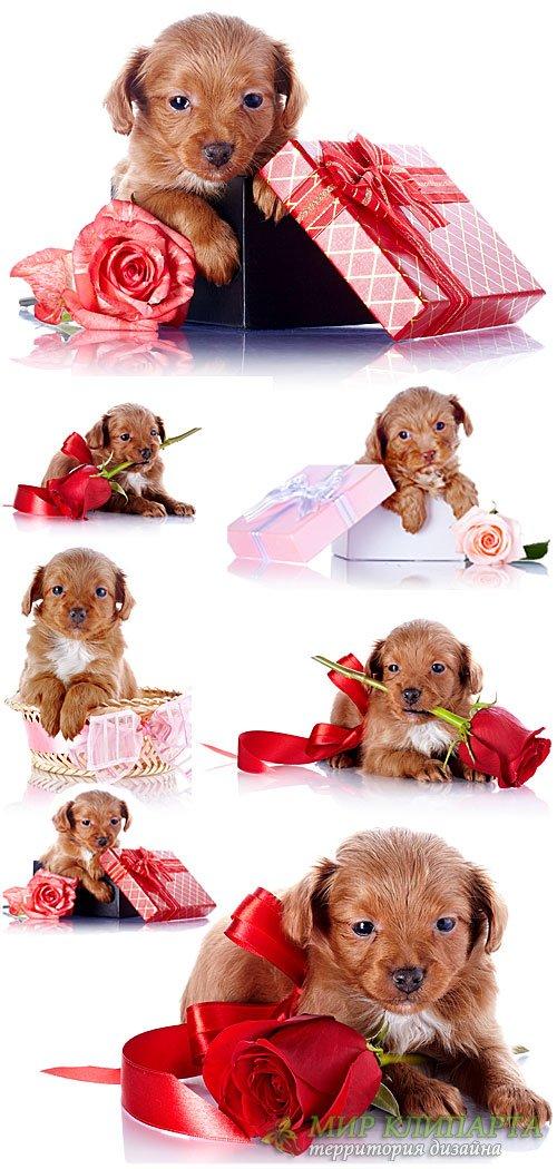 Маленький щенок с розами - сток фото
