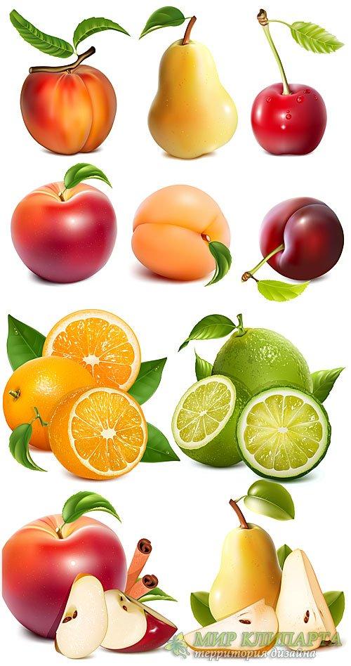 Яблоки, груши, персик, апельсин, фрукты в векторе