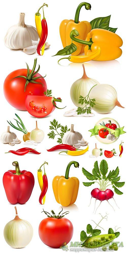 Овощи, чеснок, перец,  лук, томаты