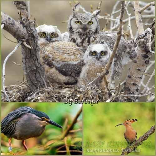 Красивые птицы в великолепной природе.