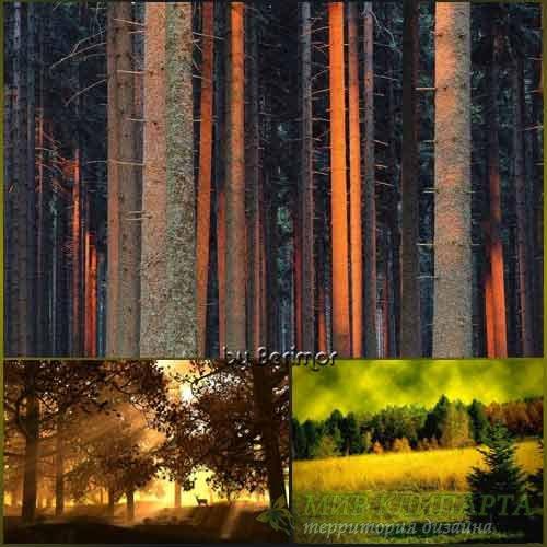Многообразный и неимоверно живописный лес.