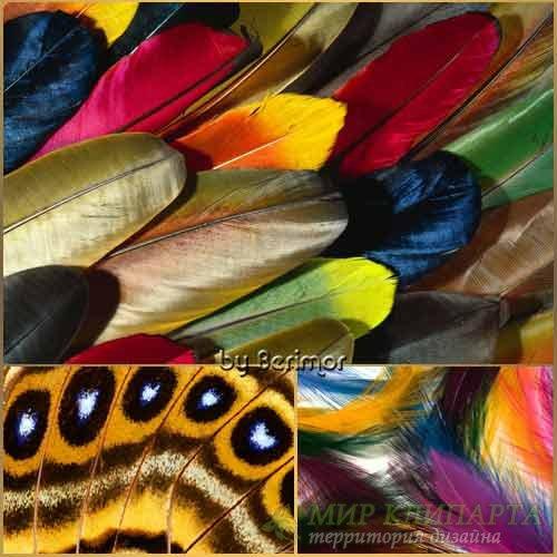 Безмерно благовидные перья многообразных птиц