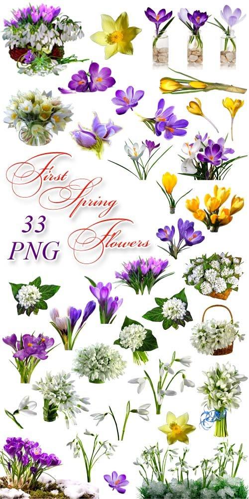 Первые Весенние Цветы - Клипарт на прозрачном фоне / First Spring Flowers