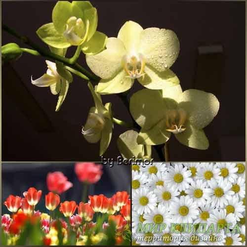 Пригожие цветы и разнообразные растения