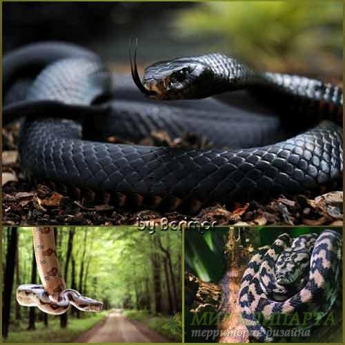 Чудесные и различные змеи
