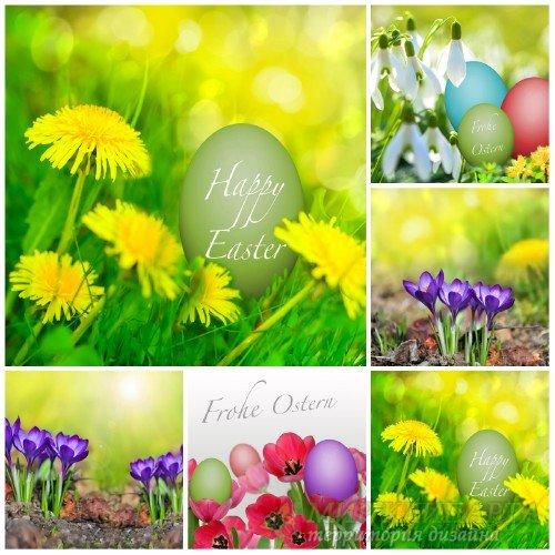 Пасха, весенние фоны с цветами / Easter, spring background with flowers - S ...