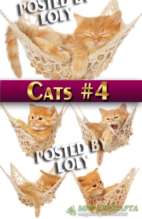 Чудесные котята #4 - Растровый клипарт