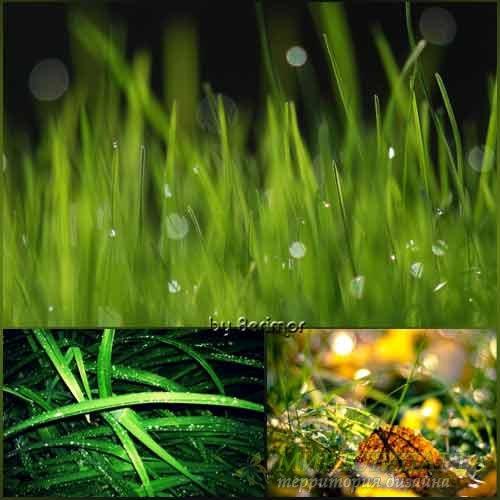 Всяческие фото поразительной травы