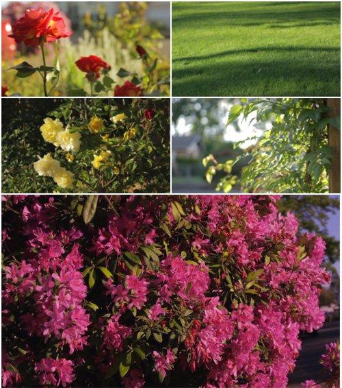 Футаж высокого качества - Цветущая земля