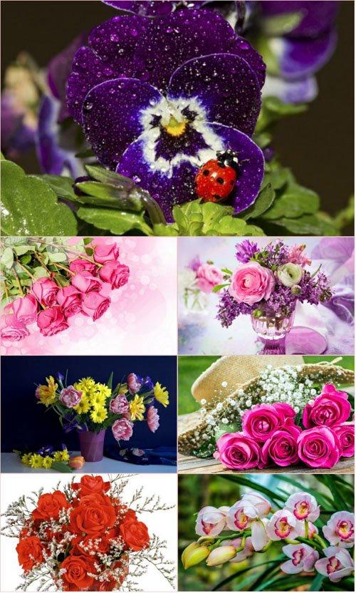 Обои для рабочего стола красивые цветы (Часть 2)