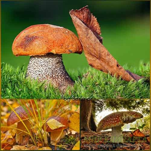 Разнообразные фото отличных грибов