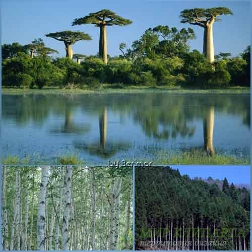 Фото интересных  и разнообразных деревьев
