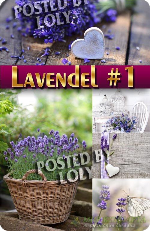 Цветы Лаванды #1 - Растровый клипарт