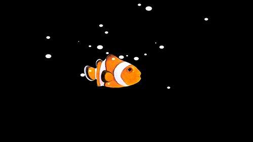 Футаж-Золотая рыбка