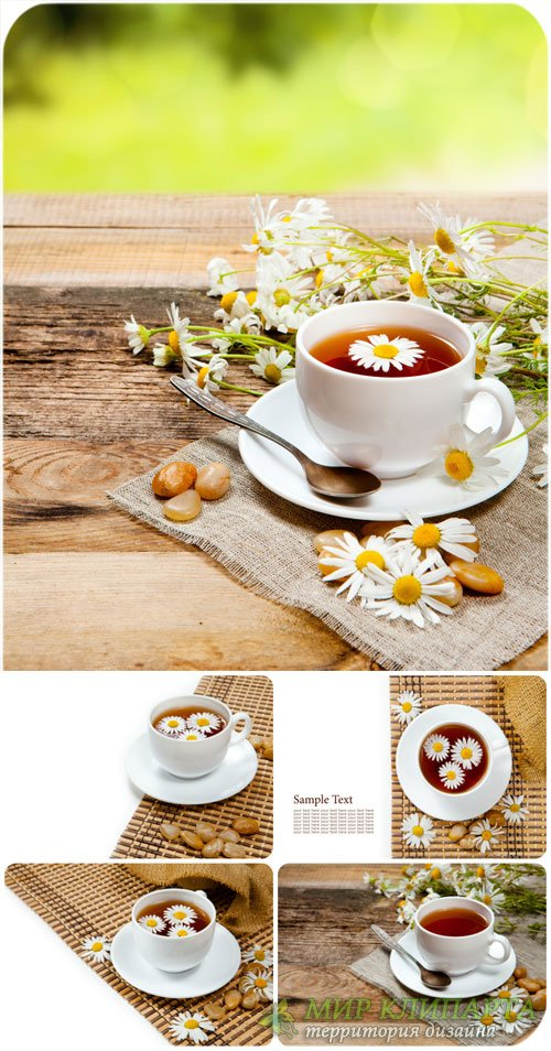 Чай с ромашкой / Chamomile tea - Stock Photo